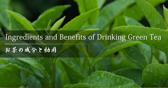 Urdu Article: Green Tea to lose weight, Benefits, Side Effects